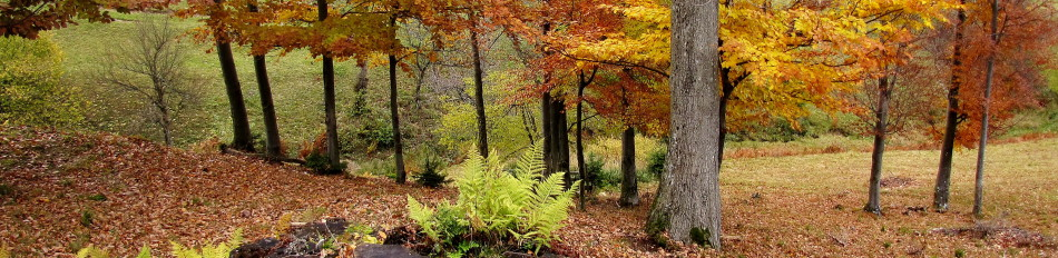 Jesen na Čreti